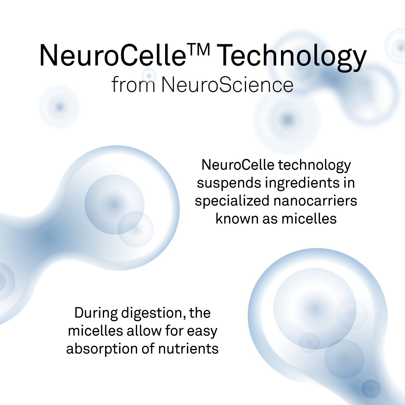 Neuro Celle Web Image